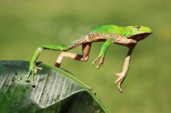 jumping-frog_1
