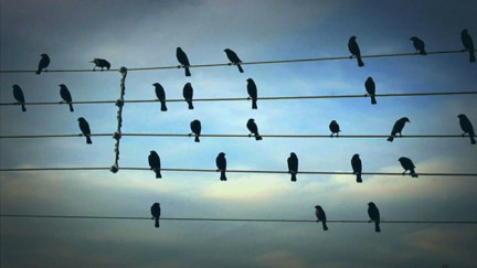 Crow's caw_4_2