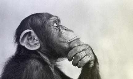 Mind Monkey_13_2