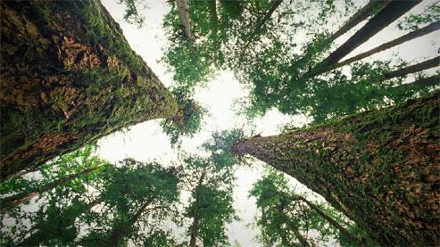 Tales of unspoken trees_0