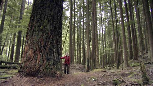 Tales of unspoken trees_16