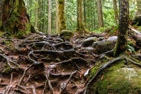 Tales of unspoken trees_4